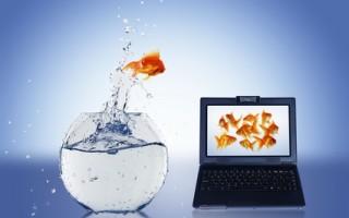 ТОП-5 полезных навыков для фрилансеров, которые значительно повысят личную эффективность